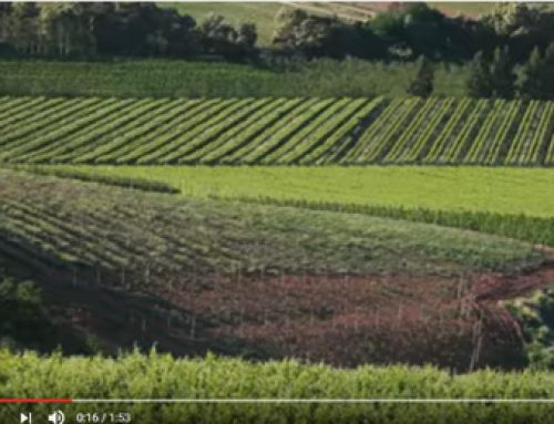 This…. is the Breedekloof Wine Valley