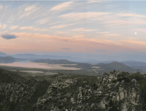 Klipbokkop Mountain Reserve – Worcester